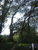 Abigel-Marco2006.10.08.157.jpg